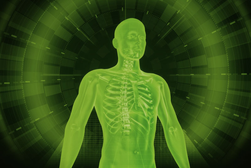 human body xray